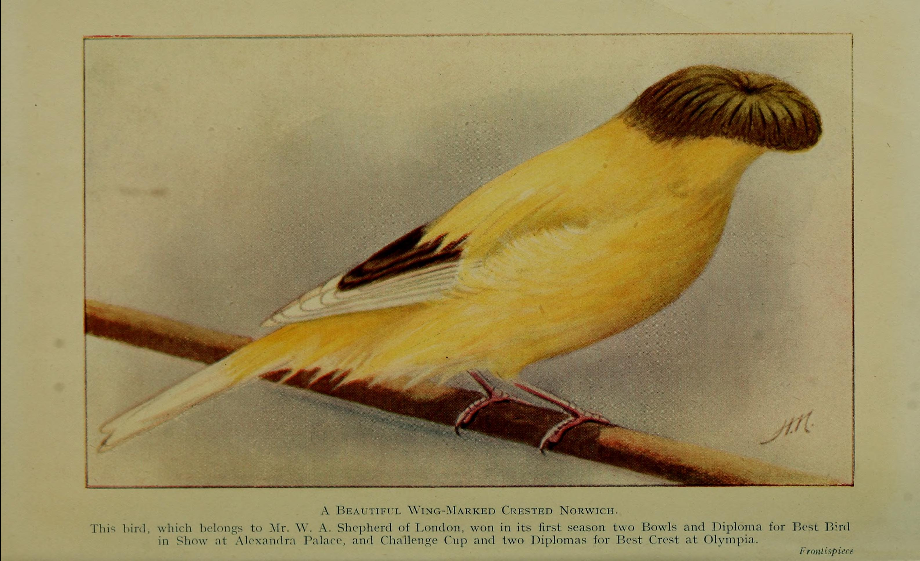 25 Canaries
